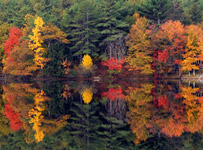 Photo of New England autumn foliage